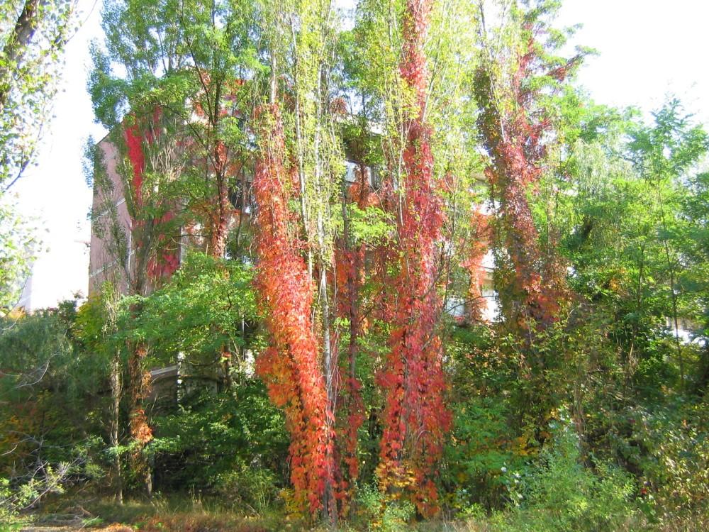 14_vegetation