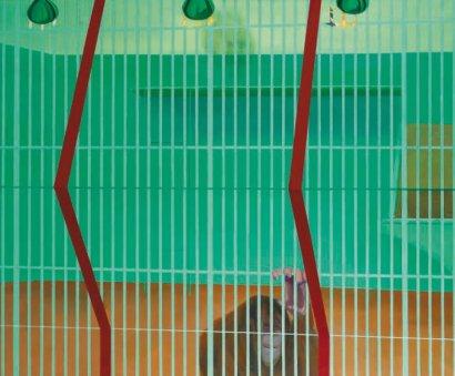 Orang-Outang-derrière-la-grille-1965