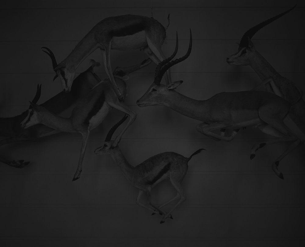 Antilops_flottant