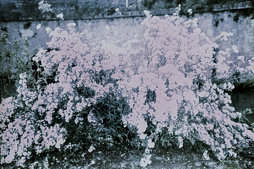 clara_chichin_le_dos_des_arbres02
