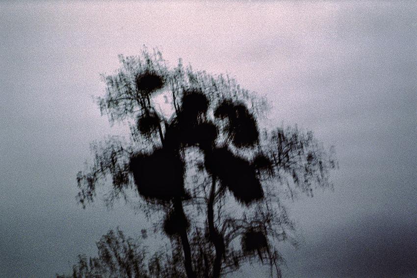 clara_chichin_le_dos_des_arbres12