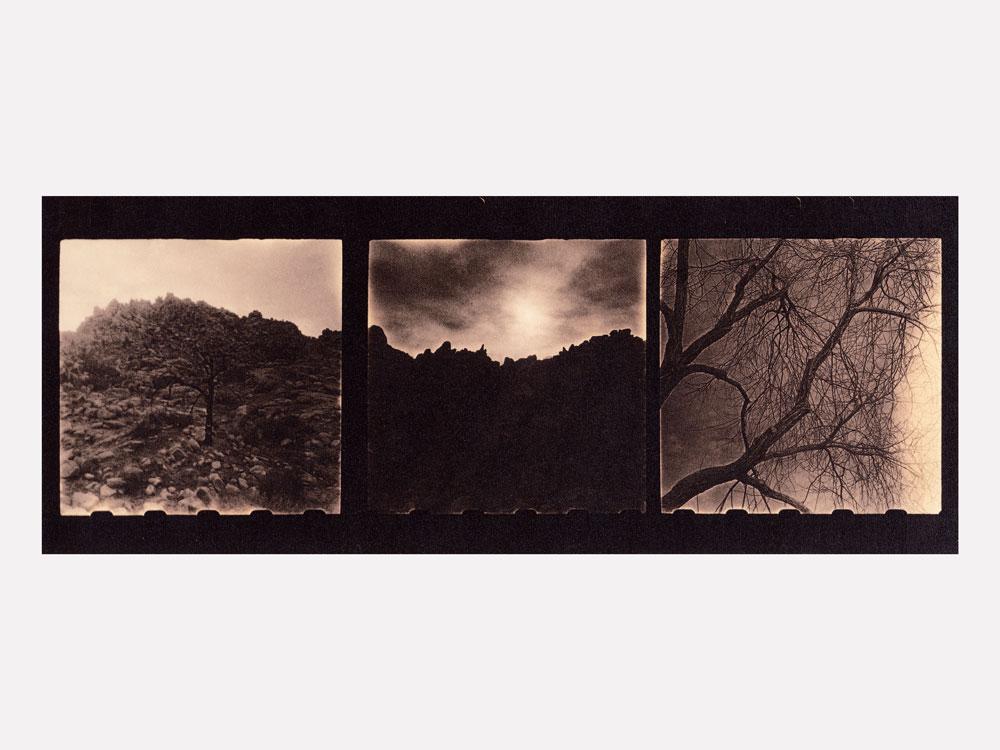 01-Zuili-Joshua-Tree-2016