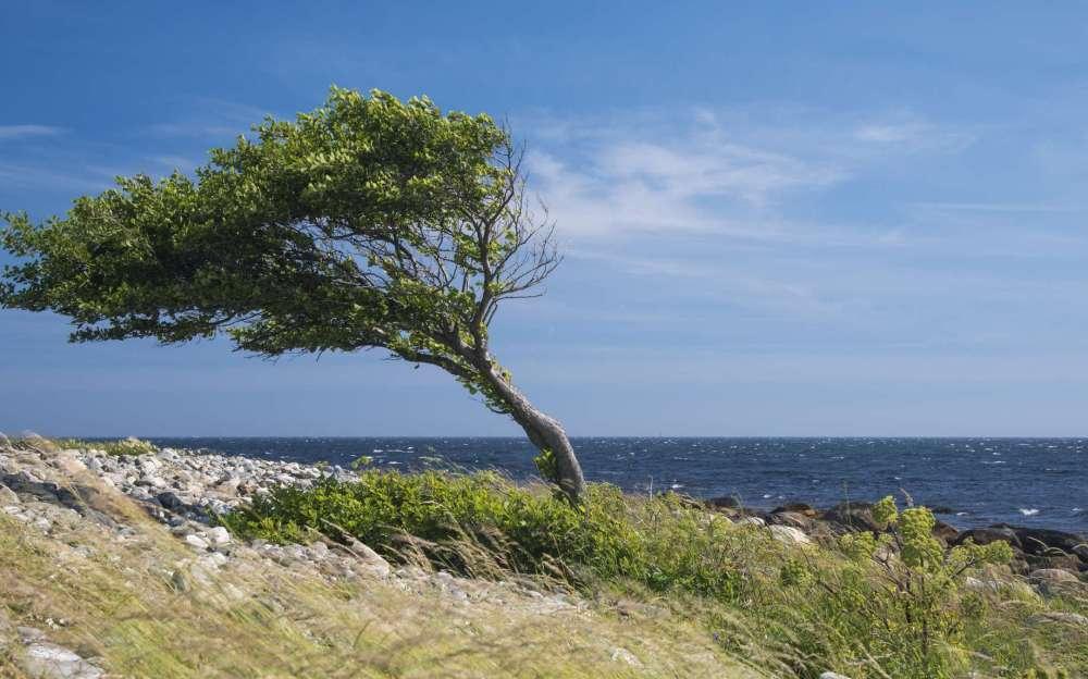 c12eadd7fc_121169_vent-arbre-mistral