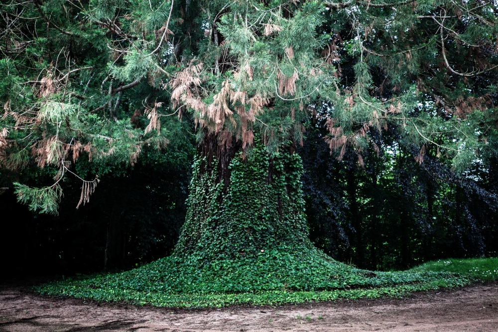 Les Bras...-61 sequoia - copie