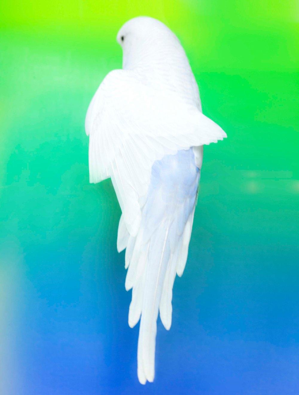 oiseau_MG_2482_1