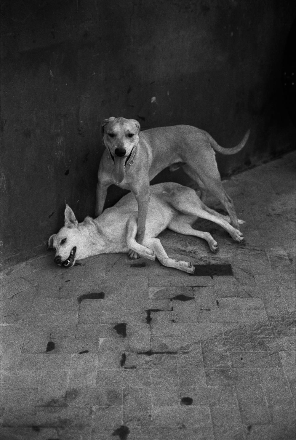 118-2016-Barcelone-chiens-02