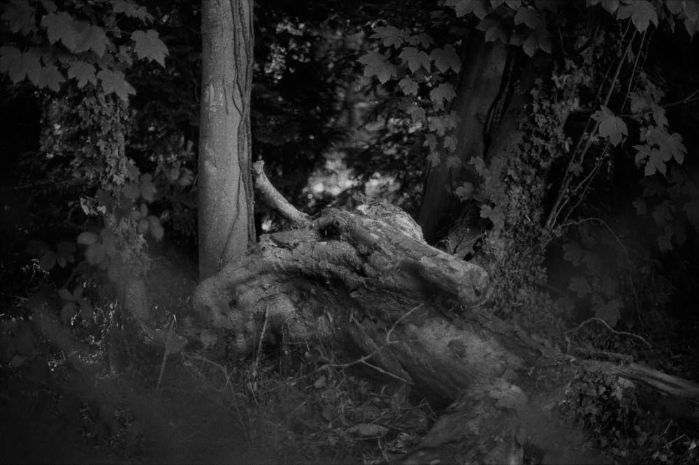 35--Marly-taureau-A.Masson-09