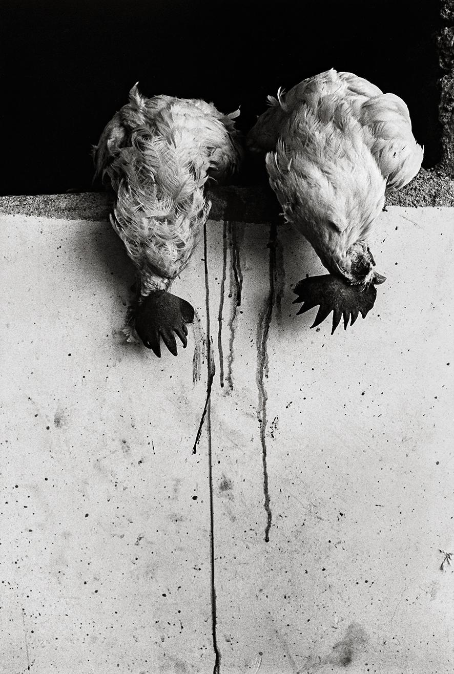 GI_Los gallos, Juchitan_1986