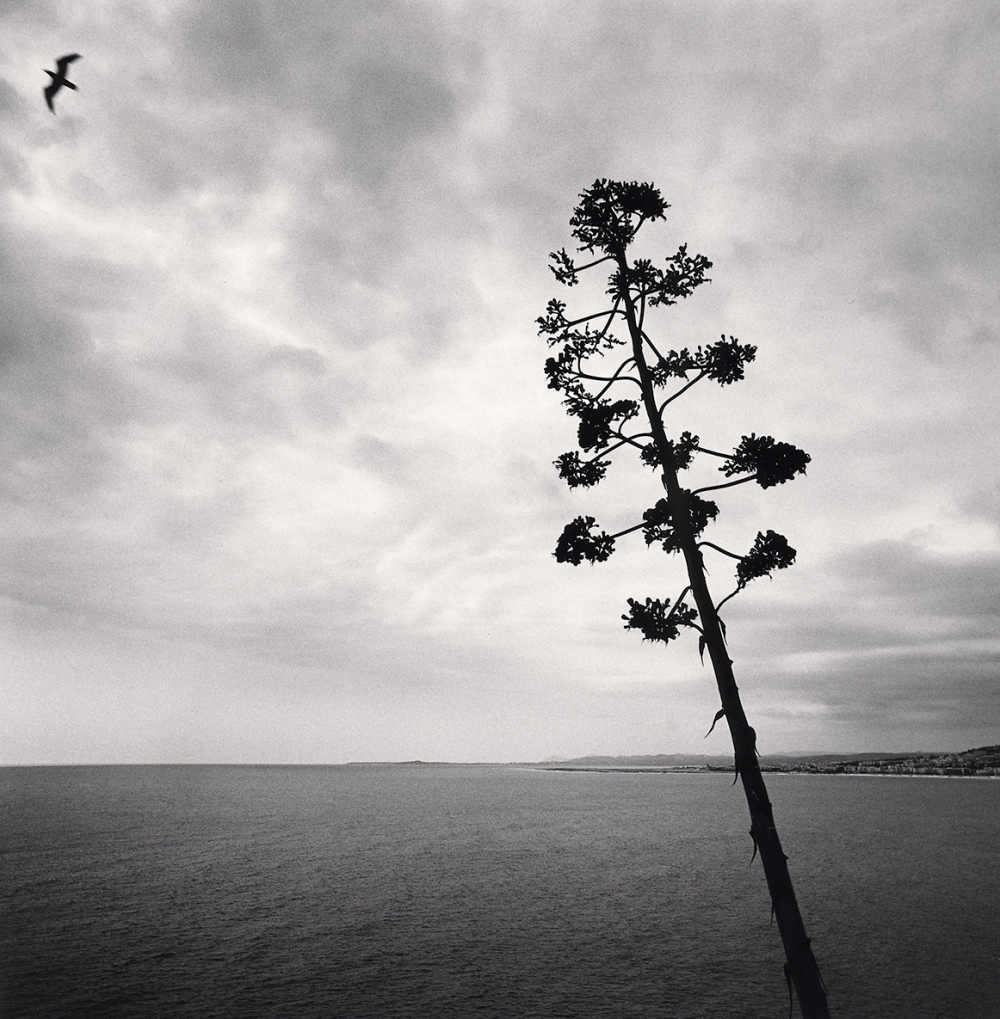 Leaning Agave and Flying Bird, Nice, France. 1996