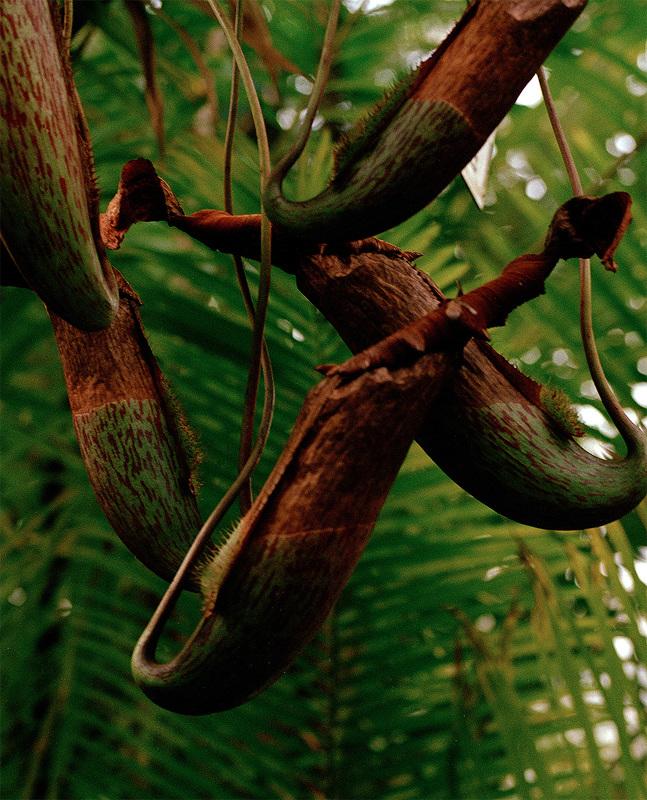 vague-reve-maria-baoli-botanique-h800_647