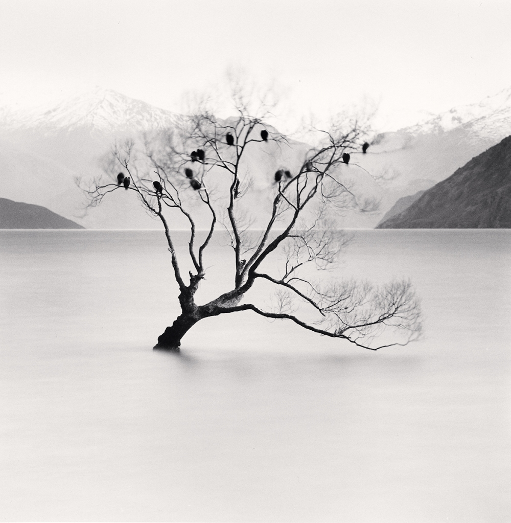 Wanaka Lake Tree, Study 2, Otago, New Zealand. 2013
