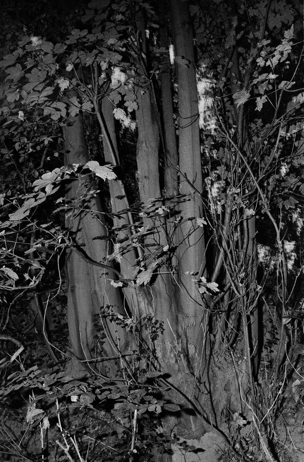 1tree, noctuary, 2019, Renée Lorie