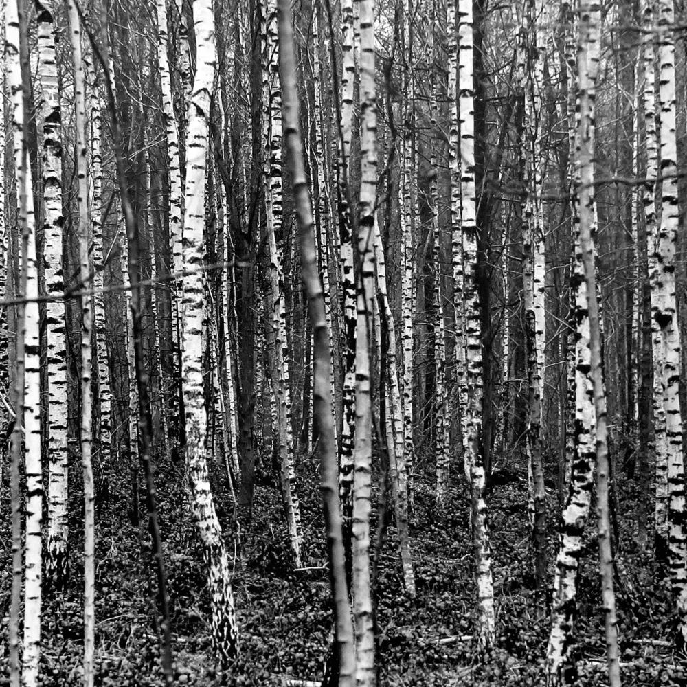 Belgique forêt de Soignes 2012