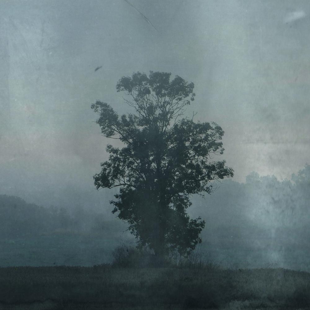 11 _arbre aussi vulnérable que superbe_