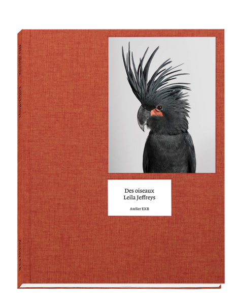 des-oiseaux-leila-jeffreys