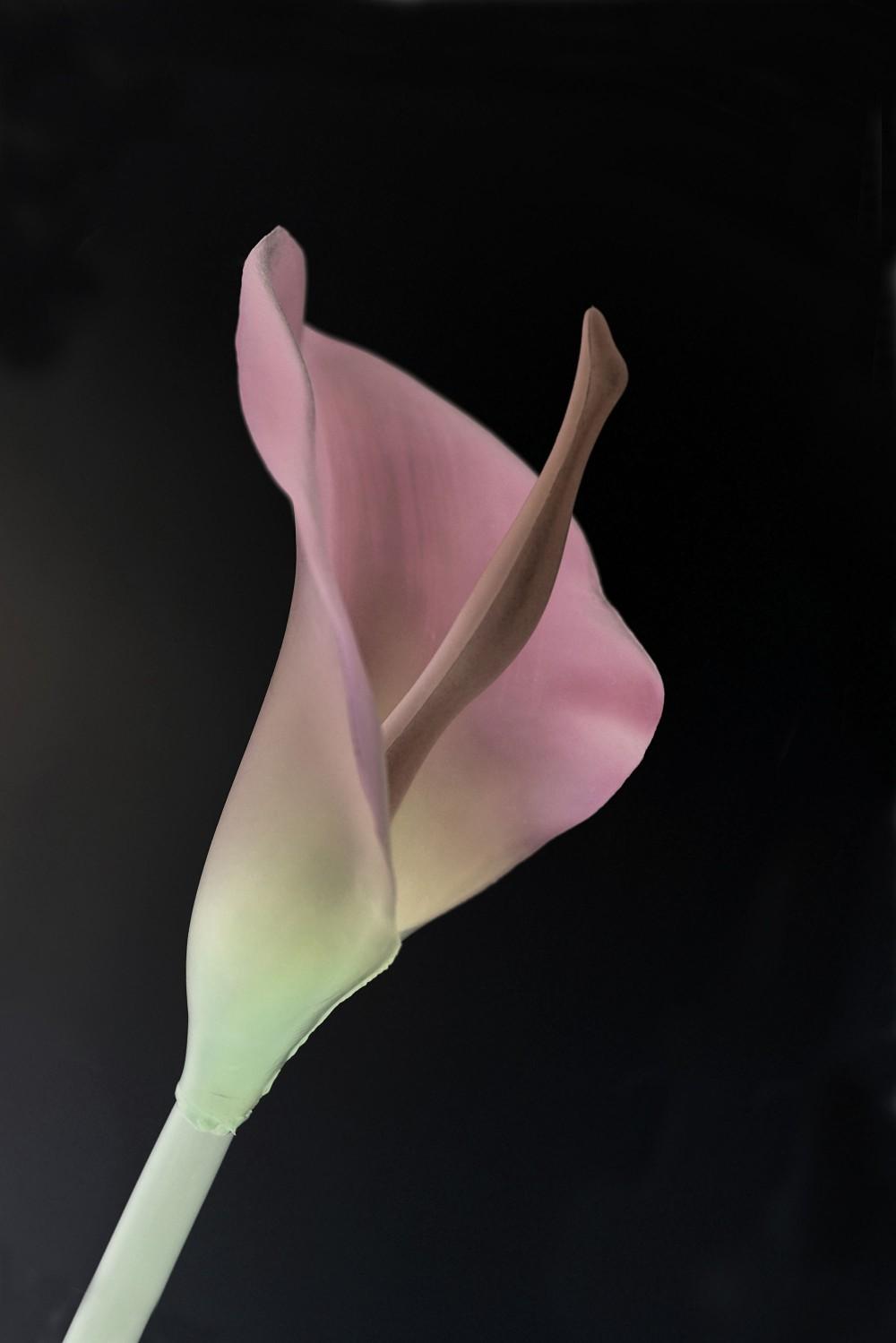 10_Fleur_de_Styrene_2019