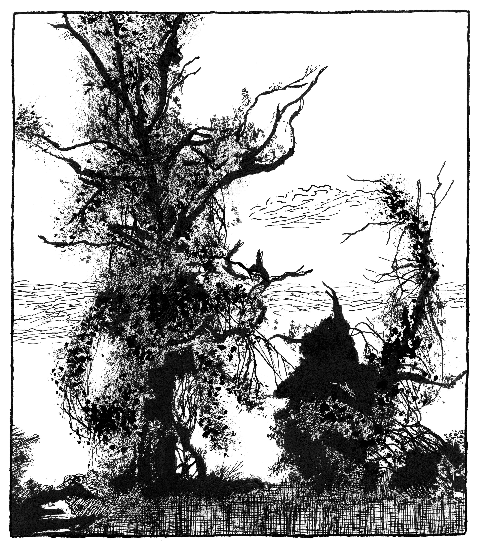 Pg 013 - arbres foudre2