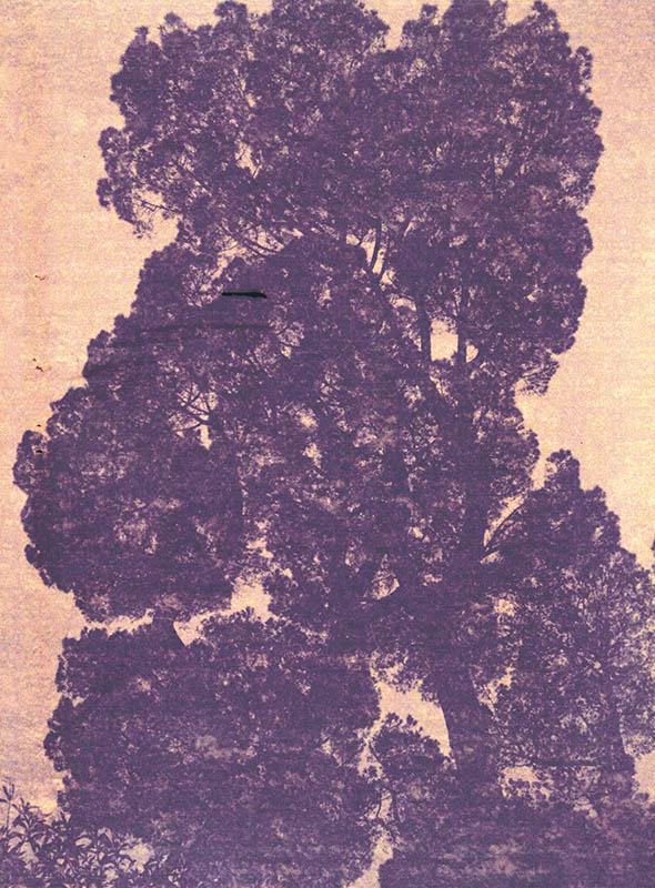 arbre couleur inverse
