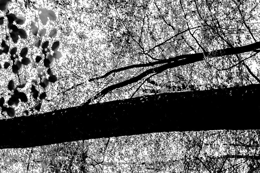 arbre graphique