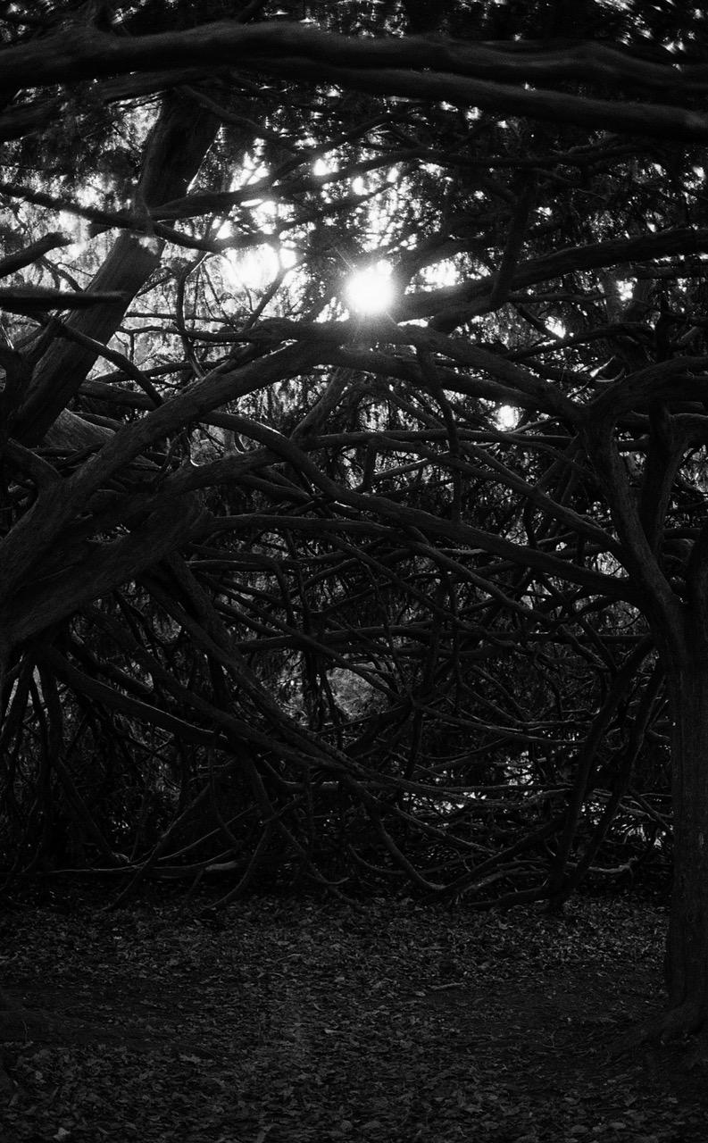 IMAGE-03-BORDER