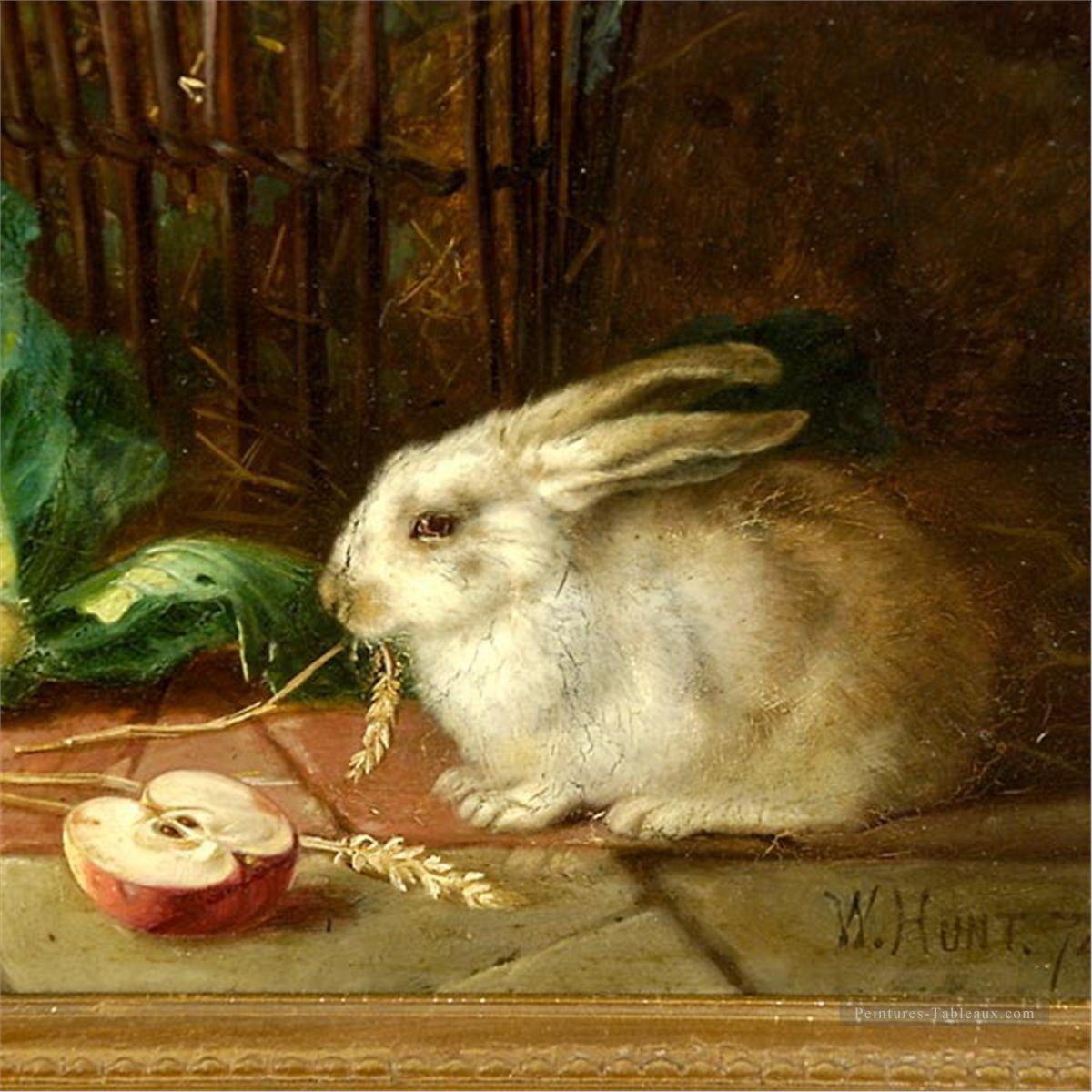 4am192D-animal-rabbits