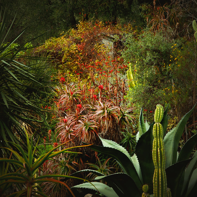 Jungles08Adobe98